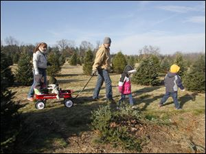 The Stine Family looking for the right tree at the farm. Parents Erin, left, and Lyle Stine, Jr., of Oregon, with their children Addison, 2, and Ethan, 11 months, in the wagon, Lily, 4 and Jacob, 5, leading the way.
