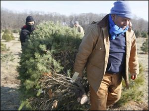 Manuel Machado, 13, and his grandfather Andres Machado, both of Toledo, carrying the Stine's tree.
