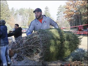 Evan Wiley, of Monclova, carries the Stines' tree to their car.