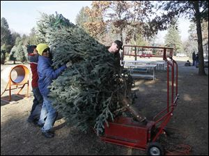 Luis Cordero, of Monclova, left, and Francisco Cabrera, of Adrian, Michigan, center, work with Brad Smith, of Grand Rapids, Ohio, to place a large tree on a tree shaker.