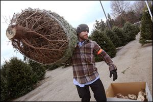 Jared Wisniewski, a supervisor on the Christmas tree lot at The Andersons in West Toledo, carries a newly trimmed and cut tree out for a customer. The store began the season with 1,190 Fraser fur trees for sale.