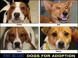 Lucas County Dogs for Adoption: 12-10