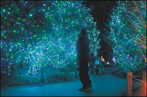 A visitors stops to take in the colors near the polar bear exhibit during this year's Lights Before Christmas at the Toledo Zoo.