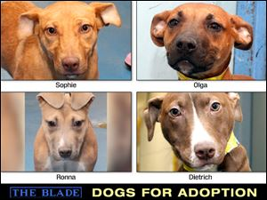 Lucas County Dogs for Adoption: Dec. 17