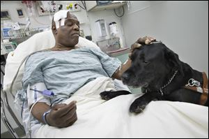 Cecil Williams pets his guide dog, Orlando, in his hospital bed following a fall onto subway tracks from the platform, Tuesday in New York.