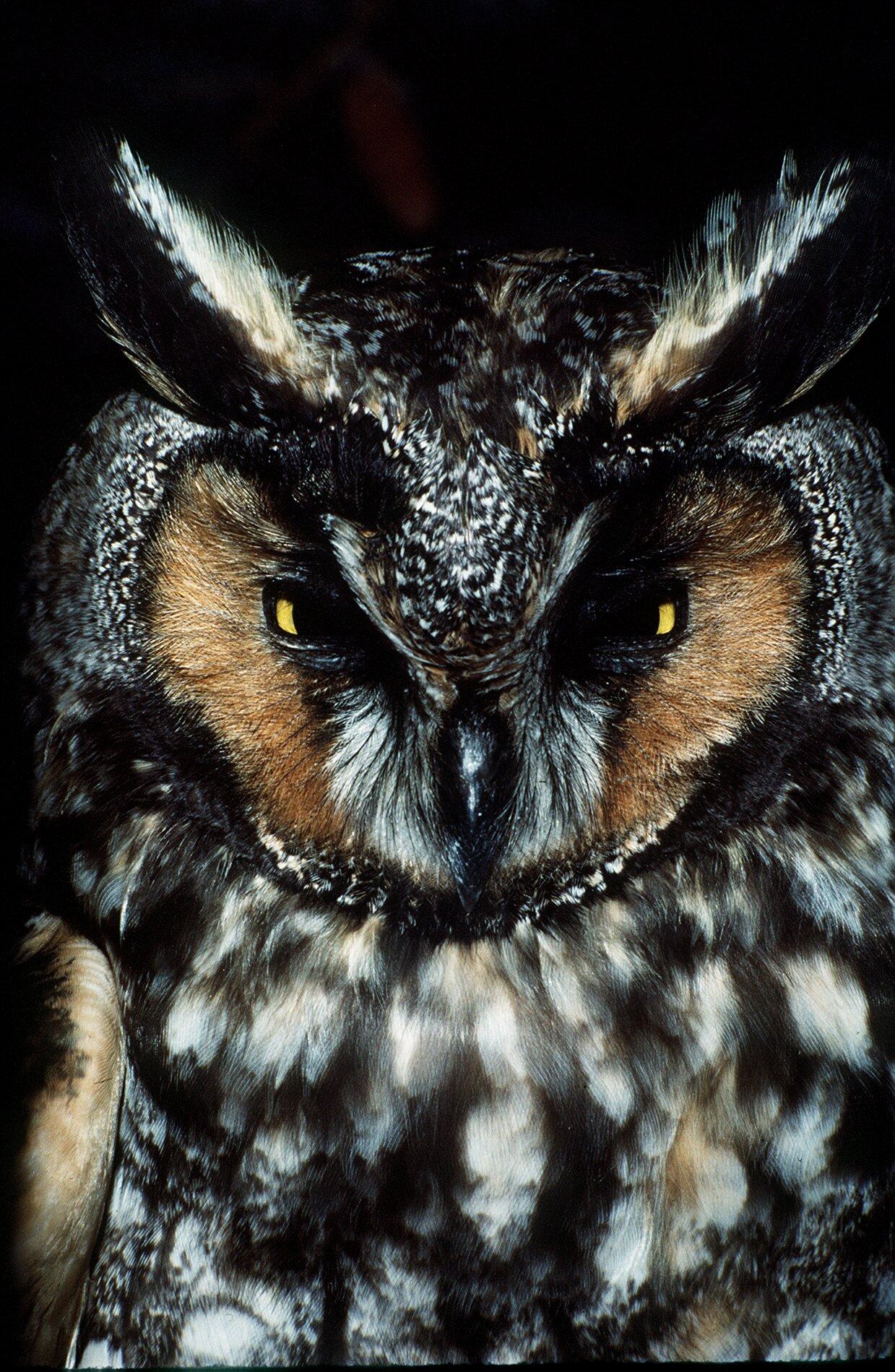 symbiotic relationship between owls  woodpeckers helps