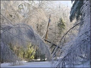 Trees frozen in ice cripple a section of power lines on Maplehurst Drive  in Belgrade, Maine, Tuesday.