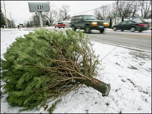 Real trees for Christmas are still popular in the United States. Many communities offer recycling opportunities.