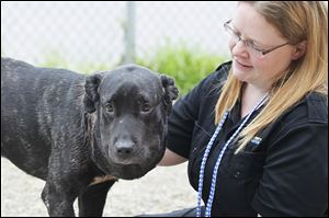 Princess P, seen here with Director of Lucas County Canine Care and Control Julie Lyle, was a dog picked up by the Lucas County Dog Warden's office with a severely embedded collar. She has had multiple surgeries and been on the mend thanks to Cutie's Fund.