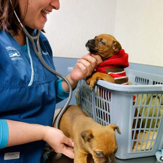 Dr-Brandy-Day-a-veterinarian-at-the-West-Tole