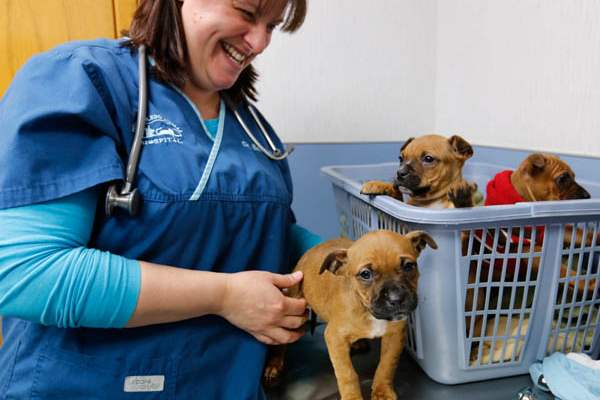 Dr-Brandy-Day-a-veterinarian-at-the-West-Toled