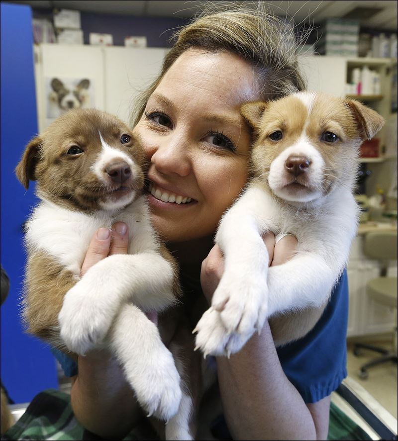 humane society puppies for adoption images amp pictures   becuo