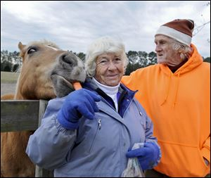 Mary and Peter Gregory feed a carrot to one of their retired, abused or neglected horses.