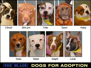 Lucas County Dogs for Adoption: 1-22