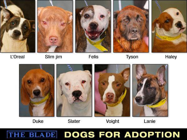 Toledo Ohio Dogs For Adoption