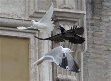 Vatican-Pope-Doves-1
