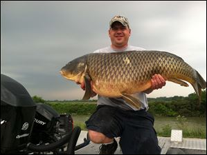 The new state record common carp, weighing 53.65 pounds and measuring 45 inches long, was taken by Patrick Johnson of Toledo while bowfishing in Sandusky Bay. Native to Europe, the common carp has been in Ohio waters since 1879. It is not one of the invasive Asian carps threatening the Great Lakes.