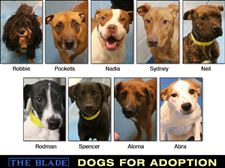 Lucas-County-Dogs-for-Adoption-1-28