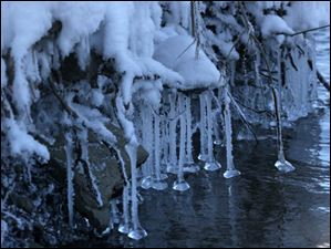 Ice drips hang on roots that have grown out of the bank of the Maumee River in Perrysburg's Orleans Park.