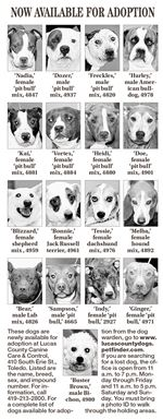 Dogs-for-Adoption-2-4