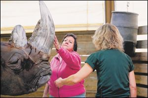 Sherry Stanfa-Stanley touches Sam, a white rhinoceros, after brushing and exfoliating him at The Toledo Zoo. Robin Gould, large Mammal keeper, right, stands nearby.