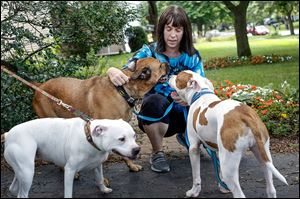 Lucas County Pit Crew Executive Director Jean Keating, with her dogs Milo, center, Wendy, left, and Chief, is troubled by the number of dogs being killed for food guarding at the local pound. 'It makes me sad that our community isn't willing to step up and take these dogs into rescue situations where they could be turned around and adopted out,' she says.