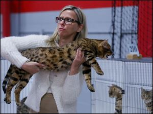 Judge Katharina Krenn reacts to how heavy Leo, a Maine Coon cat, is while she brings him to the judges table.