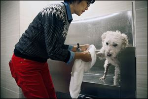 Sharon Fong gives her schnoodle, Bexley, a bath in the spa at her complex in Minneapolis. More complexes are offering options for canine comfort, a change from the days of putting dog owners in a far-flung corner of a building or not letting pooches in at all.
