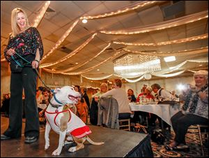 Staci Leupp walks Monty down the runway  during 'Puttin' on the Glitz for Cutie and the Pits' on Saturday at Central Park West in Sylvania Township. All of the dogs were available for adoption.