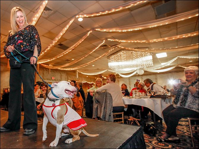 23n1leupp-2 Staci Leupp walks Monty down the runway  during 'Puttin' on the Glitz for Cutie and the Pits' on Saturday at Central Park West in Sylvania Township. All of the dogs were available for adoption.