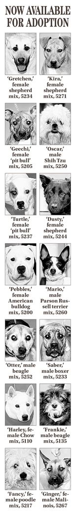 Dogs-for-Adoption-20140304