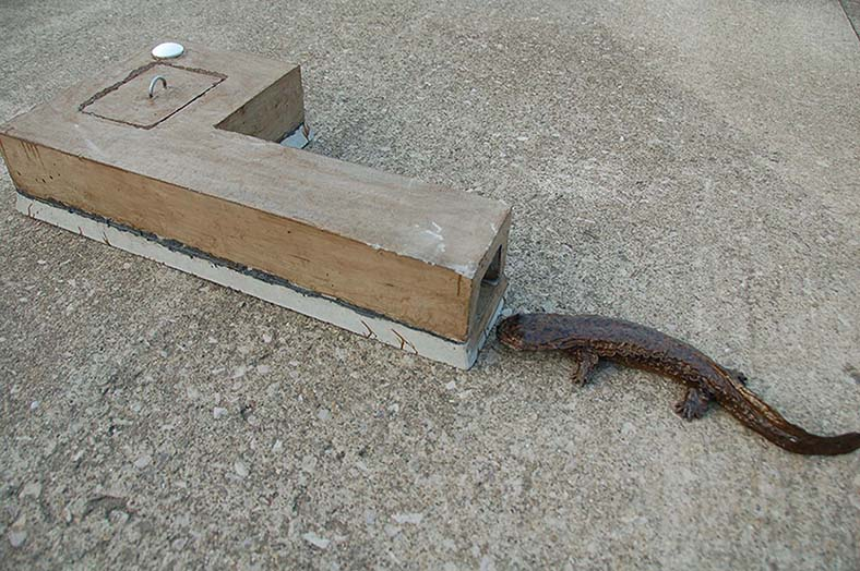 Bluffton Firm Gives Concrete Help To Salamanders The Blade