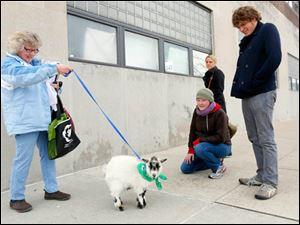 Linda Bollinger, far left, stops to show 'Eugene,' a 10-month-old goat, to admirers Alexa Coss, left, Caroline Gauger,  center, and Gabe Lemay.