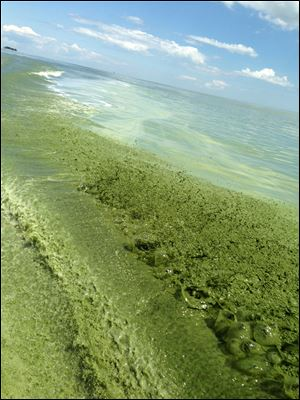Algae 'as thick as pudding' was photographed on Aug. 5, 2013, in the wake of a boat owned by Rick Butera on Lake Erie at Maumee Bay.