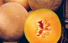The-pitted-rind-of-the-cantaloupe-is-perfect-for-hiding-bacteria