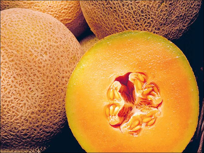 The pitted rind of the cantaloupe is perfect for hiding bacteria. The pitted rind of the cantaloupe is perfect for hiding bacteria.