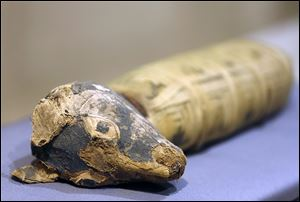 "A dog mummy is displayed at Orange County's Bowers Museum in Santa Ana, Calif. The exhibit is ""Soulful Creatures: Animal Mummies in Ancient Egypt."""
