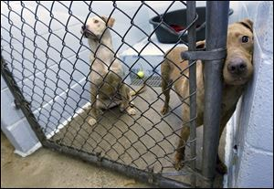 The Toledo Area Humane Society is struggling to find space for the 19 dogs, mostly Labrador retriever mixes, and six cats it rescued from a home on Friday.