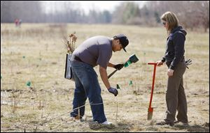 Brandon Castillo and Kate Rogner, both engineers at General Motors in Toledo, plant trees at Fallen Timbers Battlefield in Maumee. Thousands of trees have been planted there this spring.
