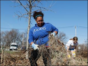 Nikki Calvin, of Toledo and an employee of the YMCA, pulling grape vines from the area.