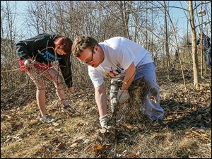 Autumn Bacon of Toledo and Travis Chitwood of Lambertville, Mich., join forces Saturday to pull out grapevine as part of Global Youth Service Day.