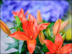 Orange lilies during the Home and Garden Show, which featured more than 300 exhibitors and workshops at the SeaGate Convention Centre.