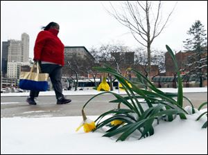 Chay Brassfield is well bundled as she walks past snow covered flowers enroute to work at One Government Center in Toledo.