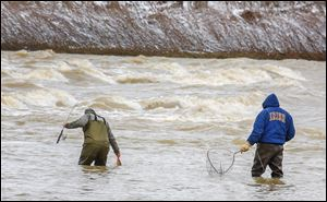 Andrew Anacki of Akron, left, hauls in a carp as his uncle, Bob Parry of Maumee, looks on while the two fish for walleye near a section of rapids in the Maumee River at Side Cut Metropark in Maumee. Walleye fishing on the Maumee River will be one of the many events that are celebrated on 419 Day.