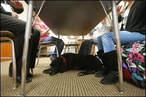 Kramer takes a nap under a table during a speech and language session.
