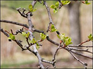 Signs of spring appear across the Toledo Botanical Garden.