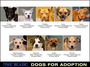 Lucas County Dogs for Adoption: 4-22