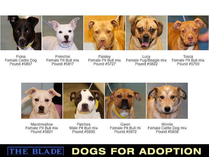 Lucas-County-Dogs-for-Adoption-4-22