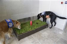 Service-Animals-Airport-DETROIT-Central-Bark