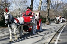 NYC-Carriage-Horse-drawn-carriage